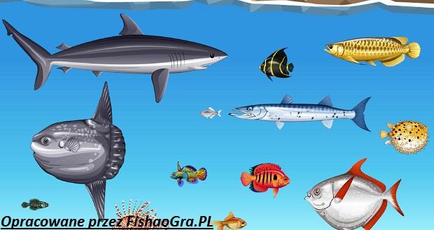 Kilka set gatunków ryb do złowienia w świecie Fishao.